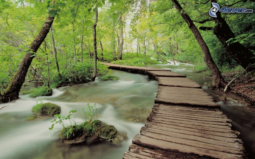 wooden bridge in a forest, stream
