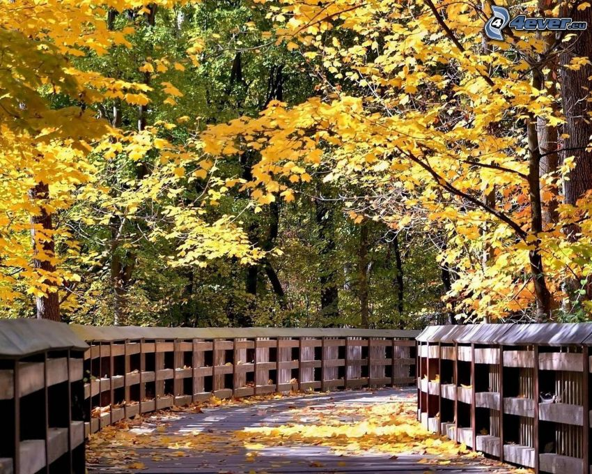 wooden bridge in a forest, yellow trees, fallen leaves
