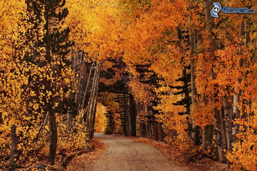 yellow autumn forest, road through forest