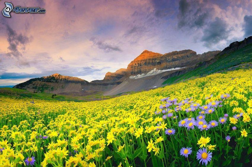 yellow flowers, purple flowers, rocky hill