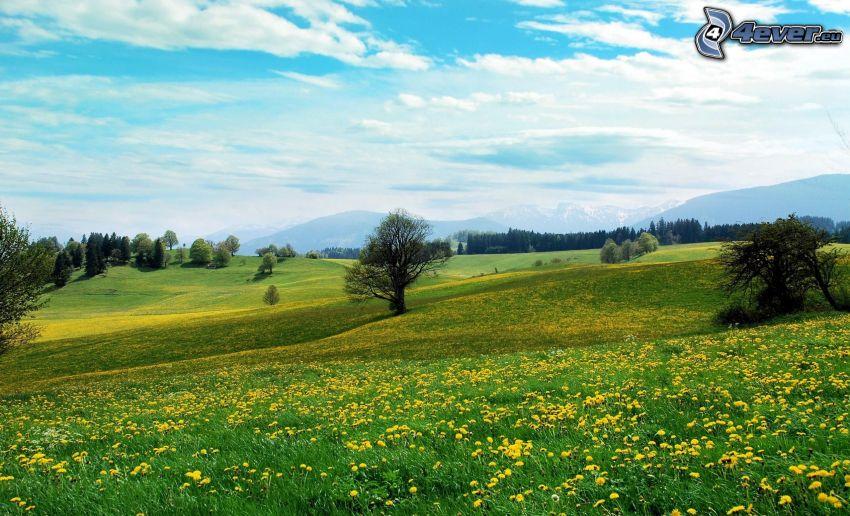 yellow meadow, dandelion, trees