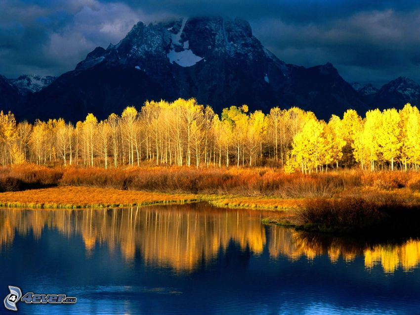 yellow trees, rocks, stream, reflection