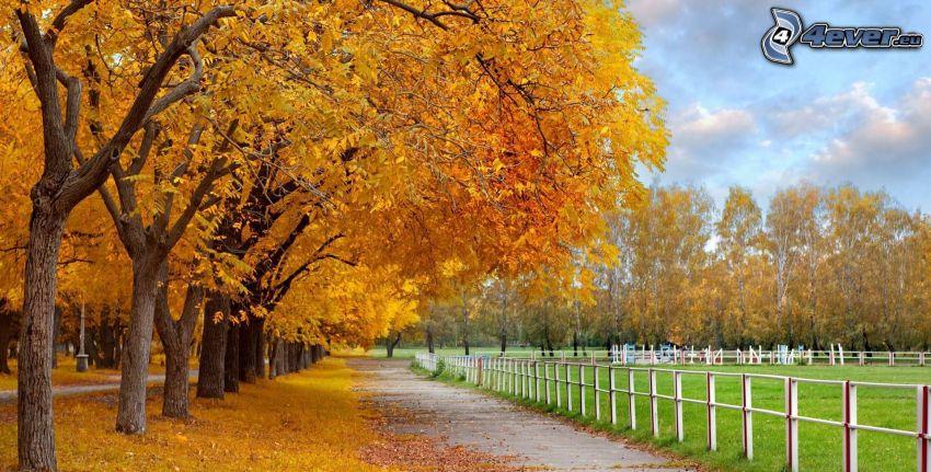 yellow trees, sidewalk