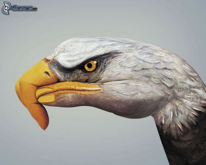 Bald Eagle, bodypainting, hand