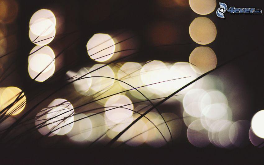 blades of grass, lights, night
