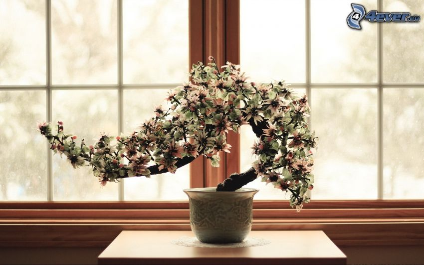 bonsai, flower-pot