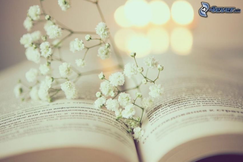 book, white flowers