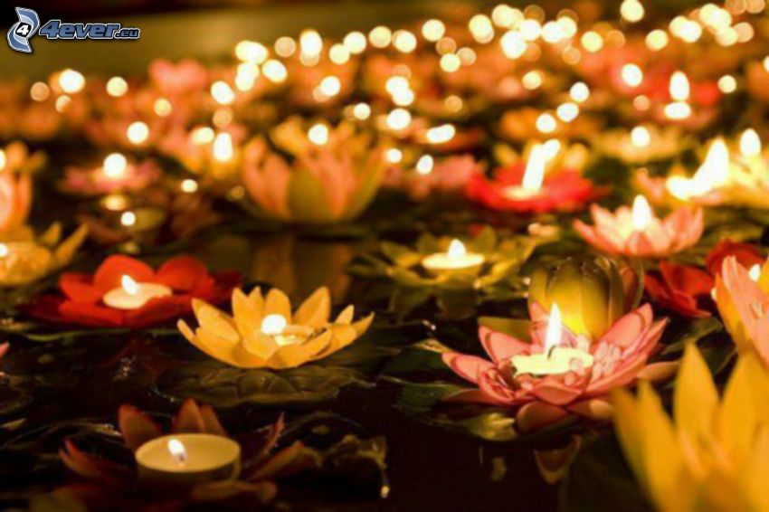 candles, water lilies
