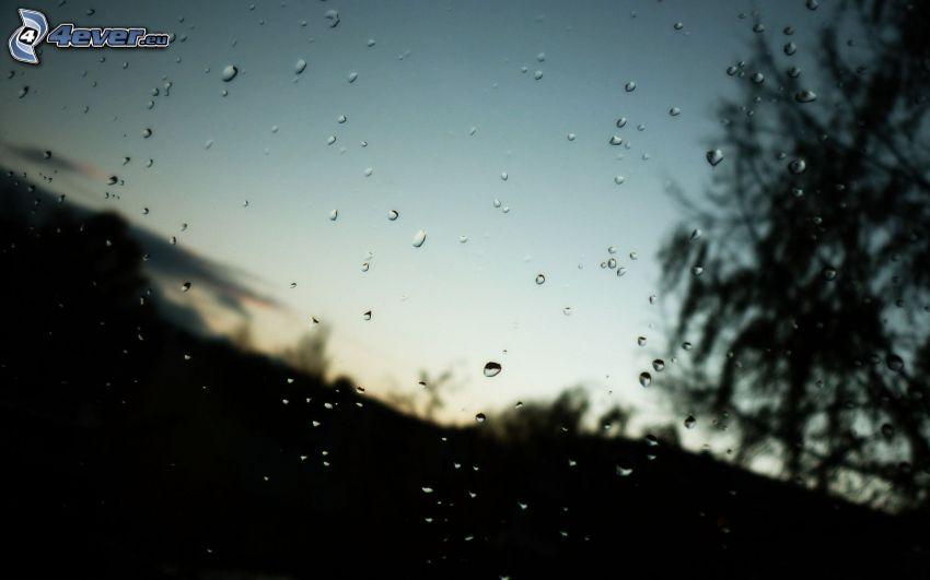 dewy glass, silhouette of tree