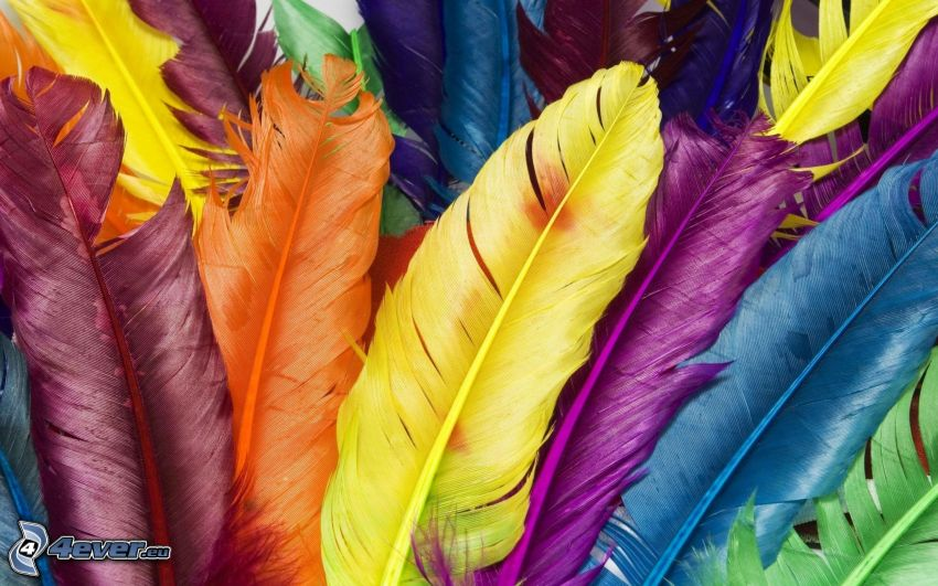 feathers, colored