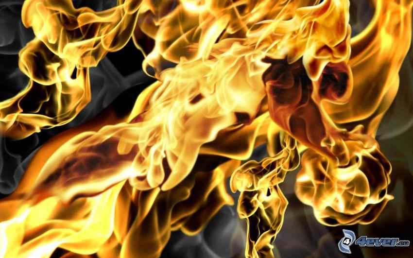 flames, fire