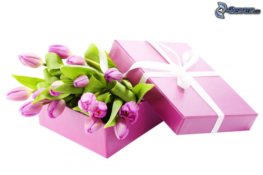 gift, purple tulips