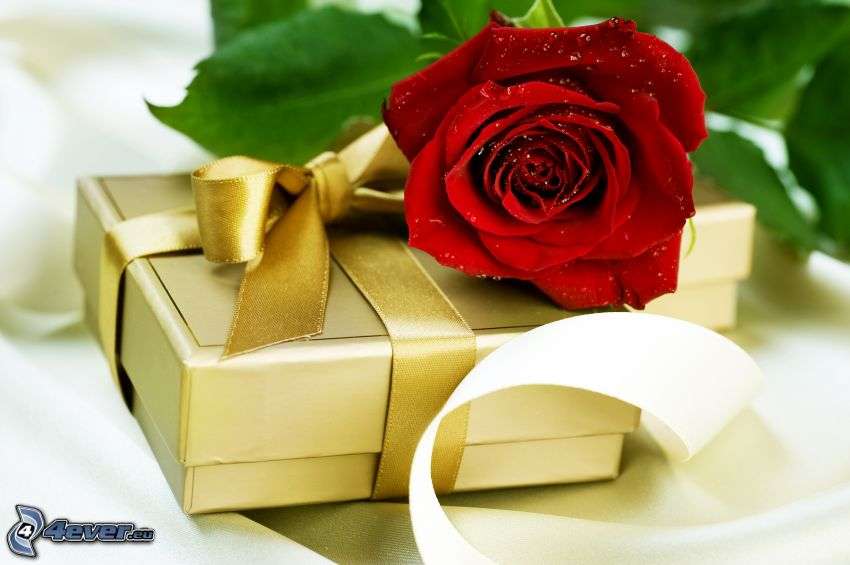 gift, red rose, ribbon