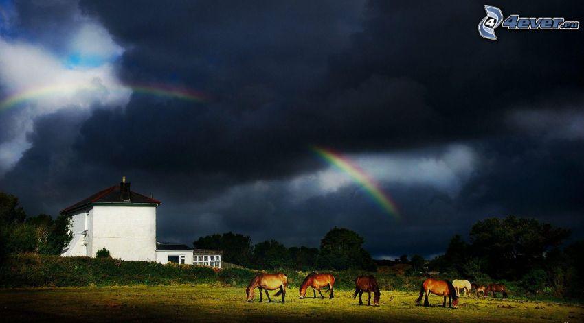 horses, house, sky, rainbow