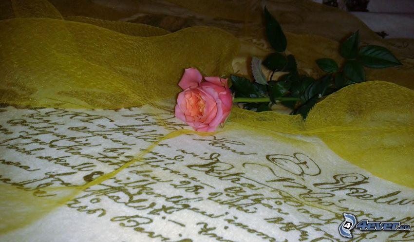 pink rose, font