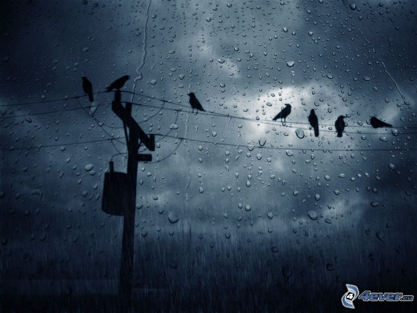 power lines, crows, dewy glass, rain, drops