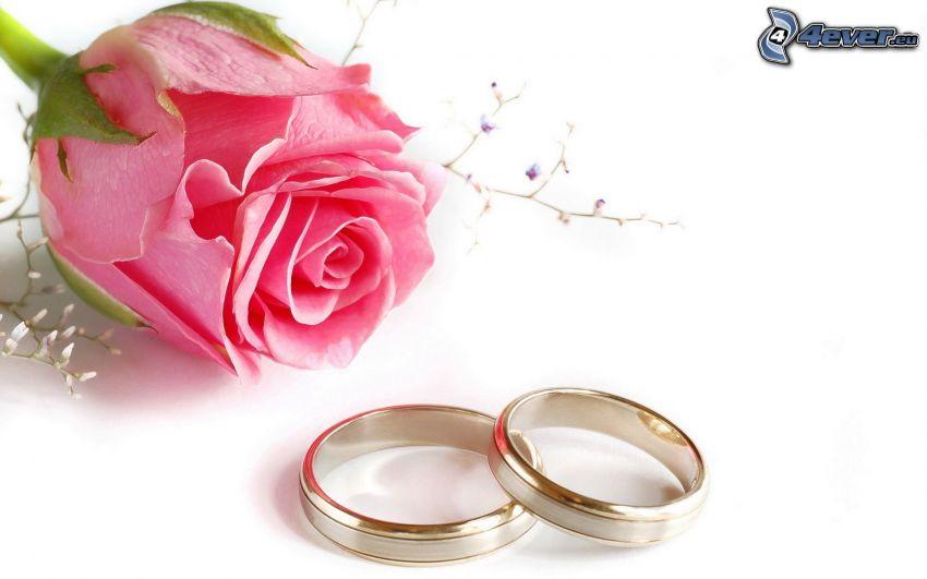 rings, rose