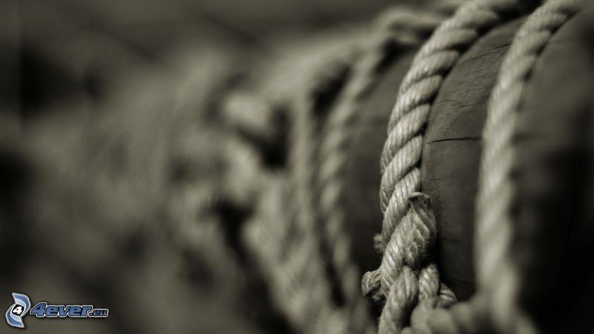 rope, wood, stump