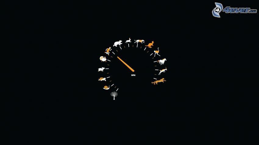 tachometer, animals