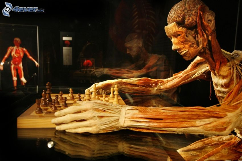 the human body, head, hands, Chess, muscles