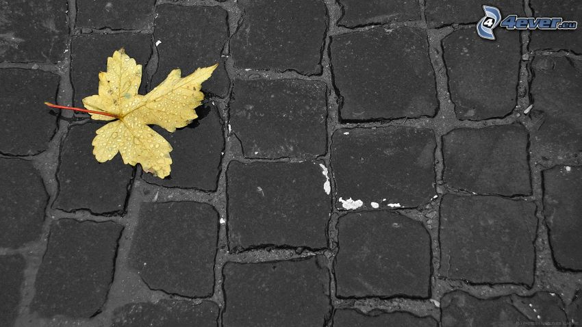 yellow leaf, pavement, water