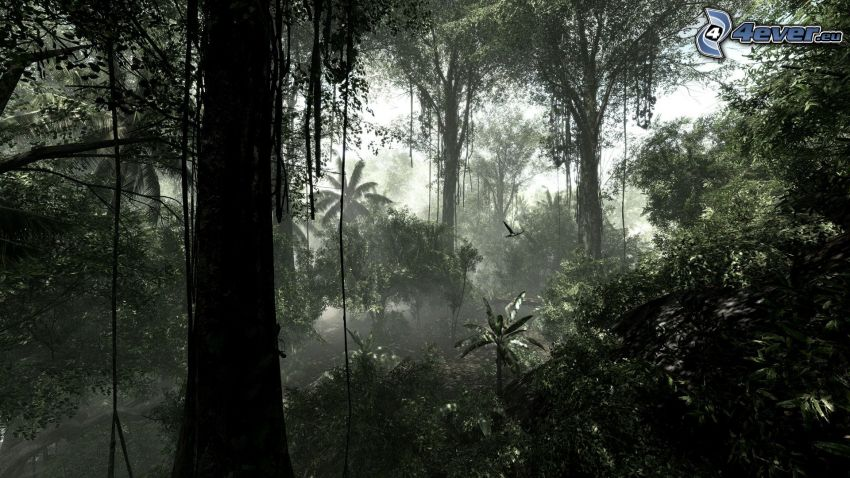 Crysis 3, jungle, trees