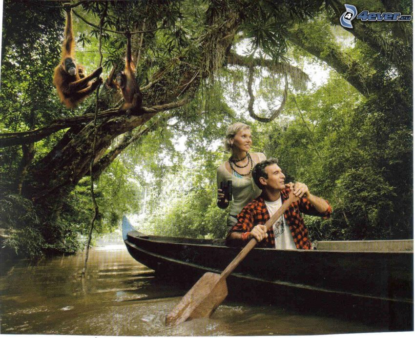 adventure, wooden boat, forest, orangutan