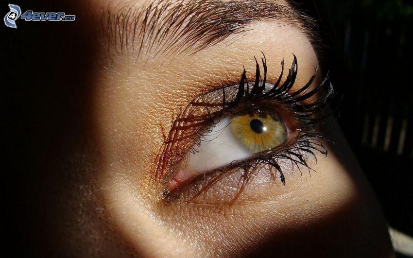 brown eye, eyelash