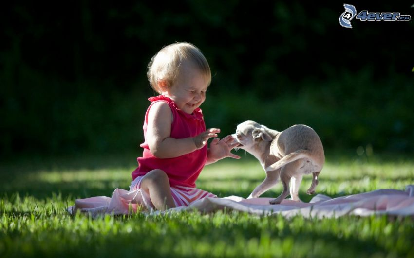 baby, puppy, joy