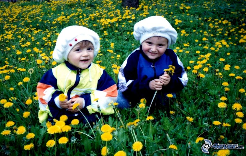 children, dandelion