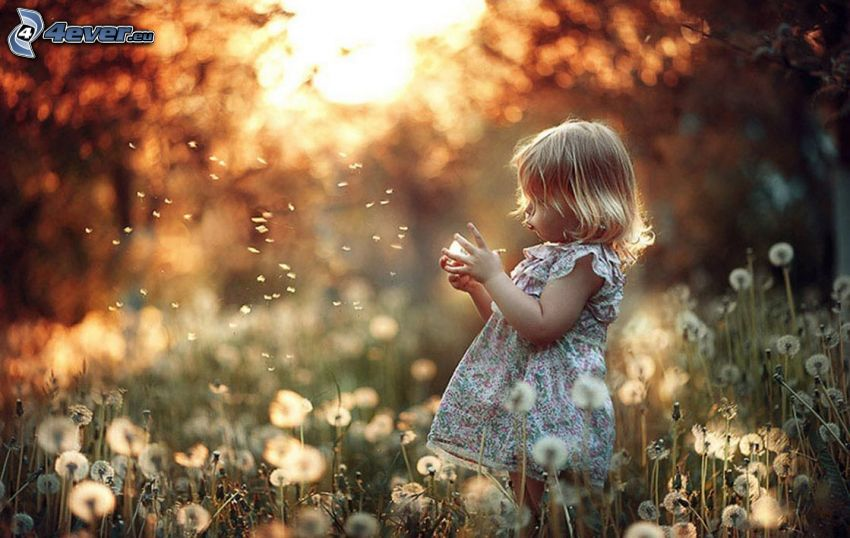 girl, meadow, flowering dandelions