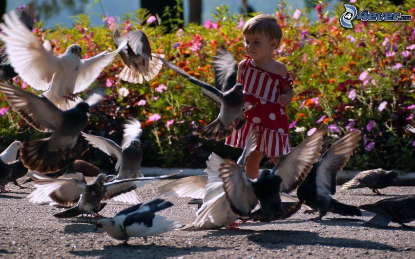 girl, pigeons
