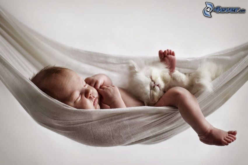 sleeping baby, small white kitten, hammock
