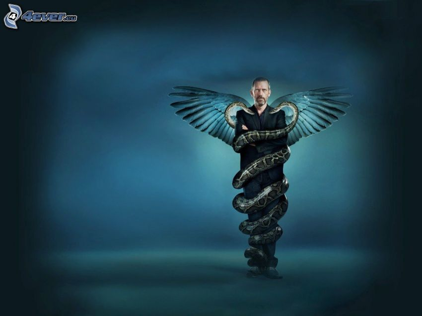 Dr. House, wings, snakes