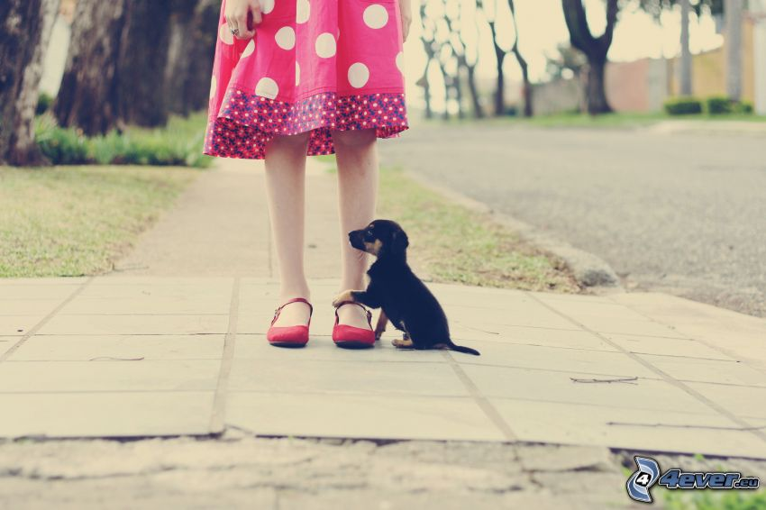 girl, puppy, sidewalk