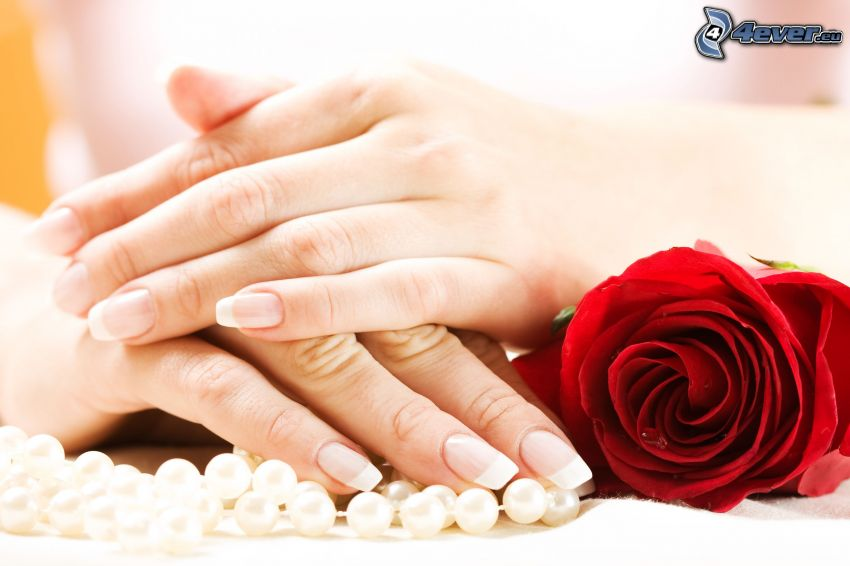 hands, red rose, pearl necklace