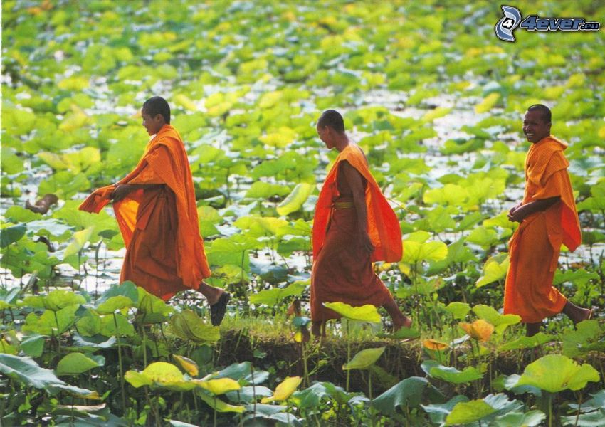 monks, field