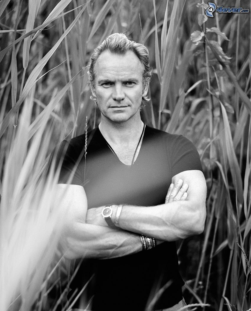 Sting, black and white photo