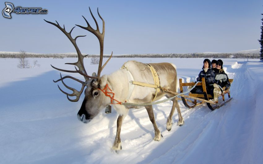 reindeer, sled, snow, people