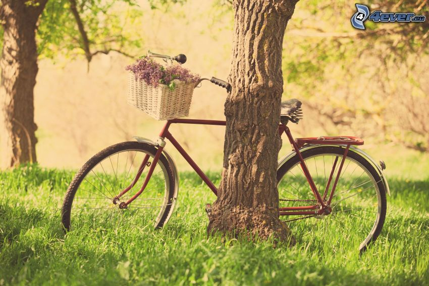 bicycle, tree, grass