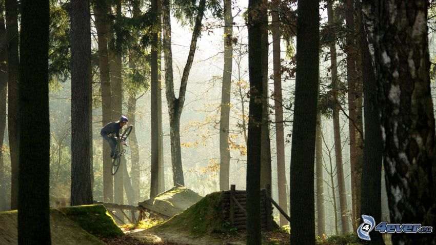 extreme biker, jump on bike, forest