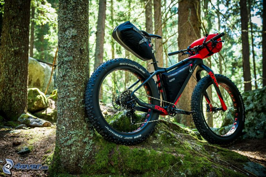 mountain bike, forest, rock