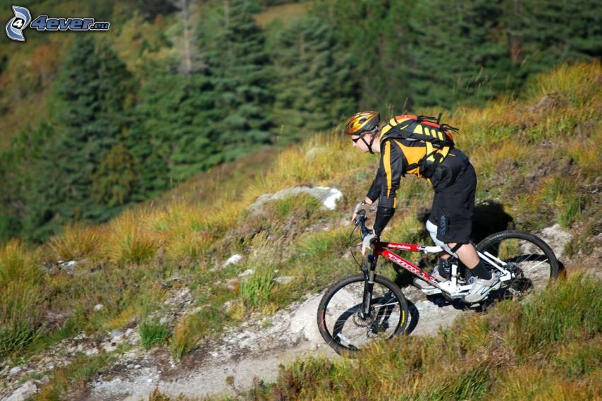mountainbiking, coniferous forest