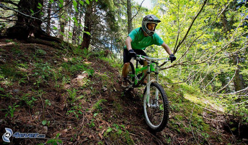 mountainbiking, forest