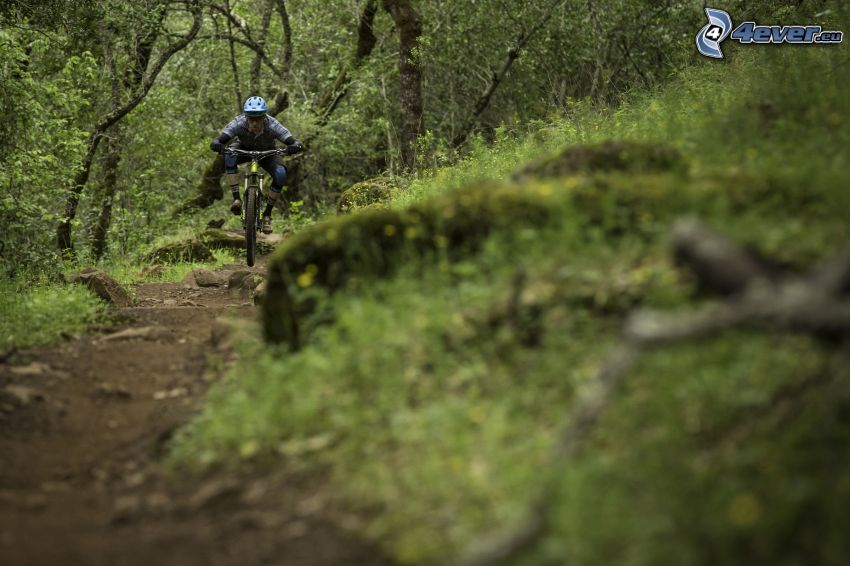 mountainbiking, forest road