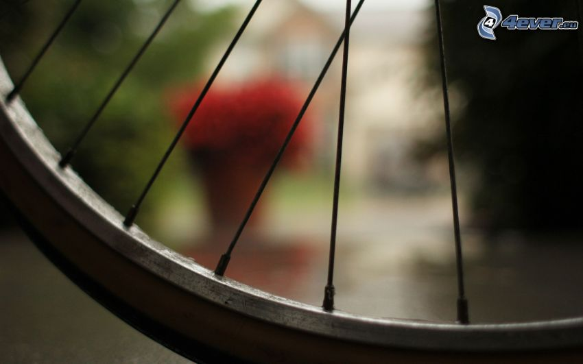 wheel, bicycle