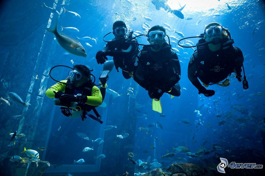 divers, shoal of fish, house