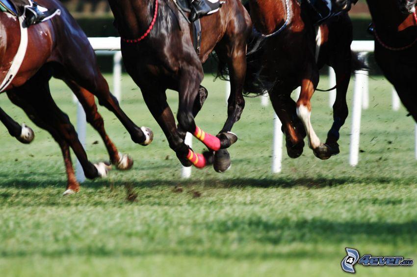 horse racing, horses