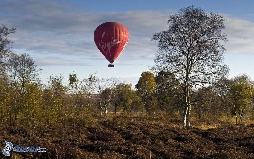 hot air balloon, trees