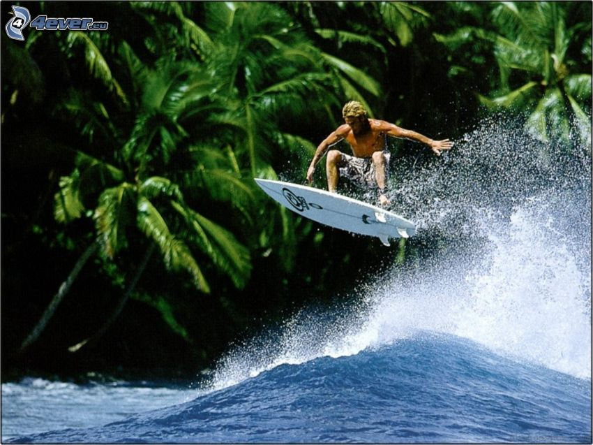 surfing, palm trees